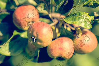 6H1C1538 