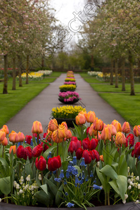 Keukenhof-030 