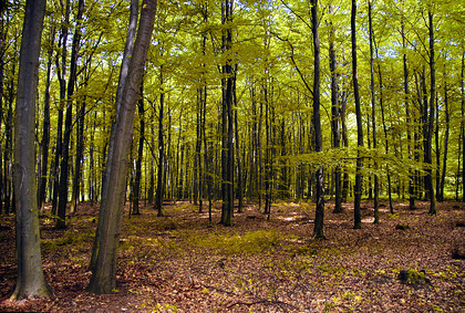 Forest 003 full res 