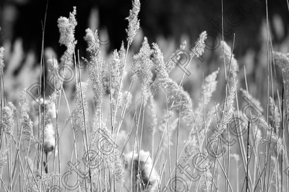 DSC 0049 copy copy 