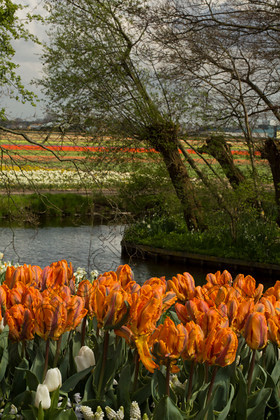 Keukenhof-005 