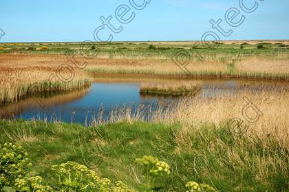 DSC 0293 