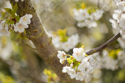 Blossom-002 