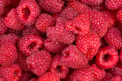 Raspberries-004 