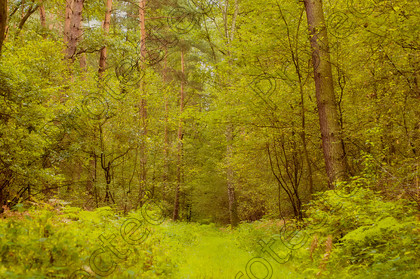 Forrest 